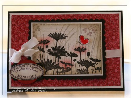 Upsy daisy collage